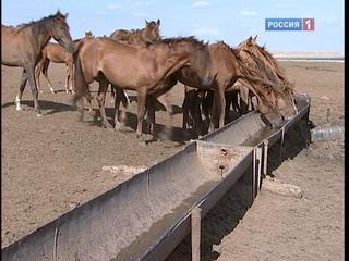 krasavitsi-dikih-plemen-video-tolstushka-hochet-kunilingus-zvoni
