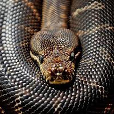 В Еврейской автономной области в палату больницы заползла змея