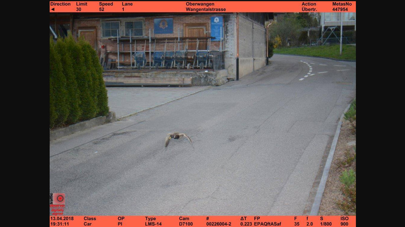 Швейцарские утки дважды попались на радар за превышение скорости