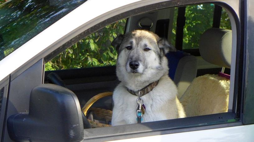 Коты и собаки рулят: вот как домашние питомцы влияют на выбор автомобиля!
