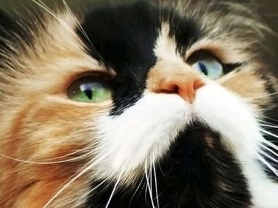 """В приморском зоопарке кошка стала """"мамой"""" для ежат-сирот"""