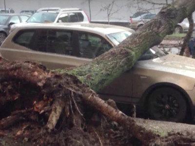 На западе Москвы дерево повредило ЛЭП и несколько машин