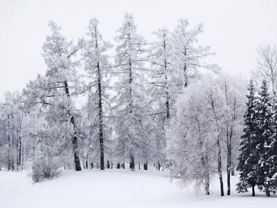 Погода на выходные: воцарение русской зимы