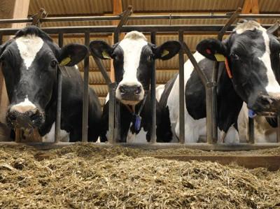 Китайцы вложат $400 млн в сельское хозяйство Татарии