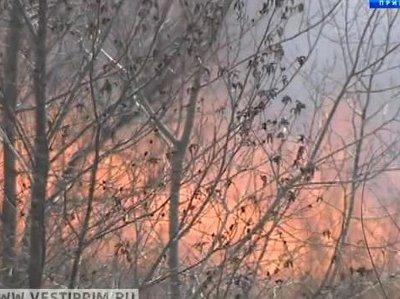 Жителей Владивостока призывают не допускать возникновения лесных пожаров