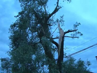 Чеченский ураган повредил 122 дома и повалил сотни деревьев