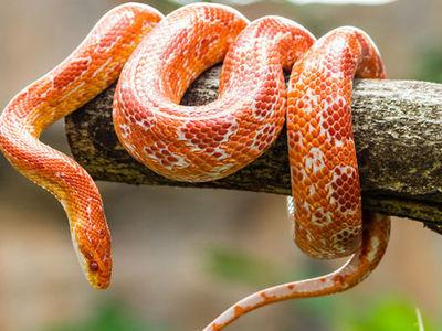 Пассажир из Нигерии пытался ввести в Германию 20 змеиных голов