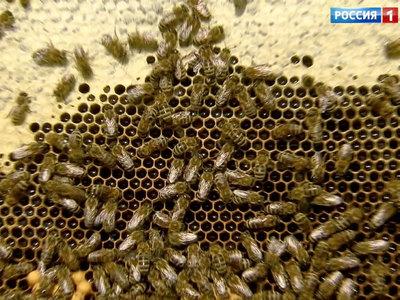 В Австрии из городского парка украли миллион пчел