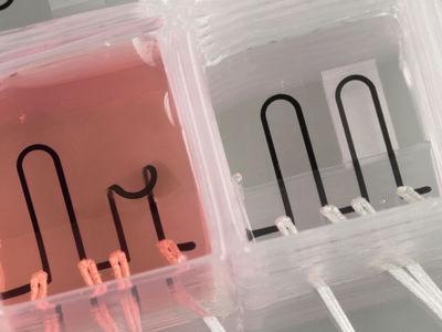 """Впервые напечатано """"сердце-на-чипе"""" со встроенными датчиками"""