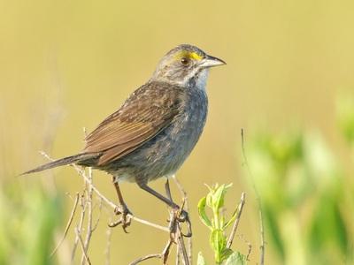 Экологическая катастрофа в Мексиканском заливе напоминает о себе: в организмах птиц найдены следы нефти