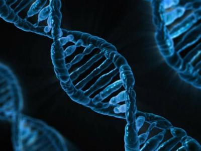 75% нашей ДНК бесполезны. И это хорошо