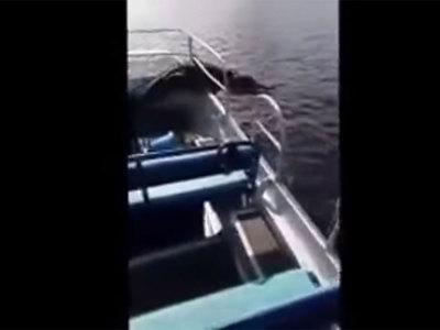 Прыгнувший в лодку аллигатор едва не утопил туристов. Видео