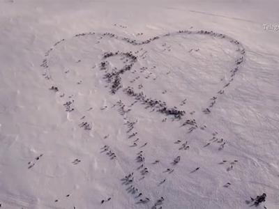 В Норвегии закрыли телепрограмму для медитации с кочующими оленями