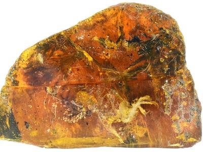 Впервые найден птенец, застывший в янтаре 99 миллионов лет назад