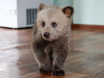 Переполох в Черемушках: запертый в машине медведь ждал водителя с обеда