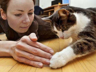 Анализ ДНК показал, как одомашненные кошки захватили мир и кто им в этом помог