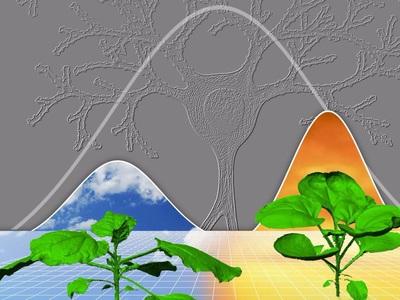 Растения развиваются по тем же принципам, что и человеческий мозг
