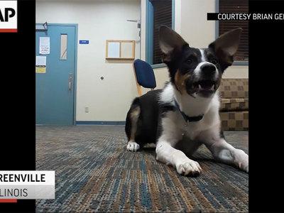 Американец научил собаку лаять шепотом. Видео