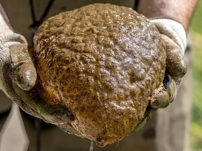 Мозгоподобное существо, найденное в Канаде, оказалось колонией древнейших организмов