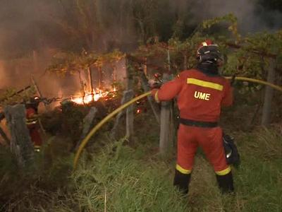 В Португалии объявили трехдневный траур по жертвам лесных пожаров