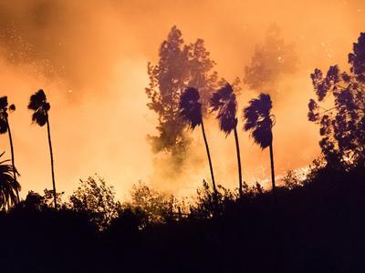 """Площадь пожара """"Томас"""" В Калифорнии составляет уже более тысячи квадратных километров"""