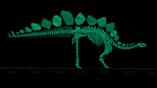 Кости стегозавра Софи подверглись лазерному сканированию и компьютерной томографии для создания компьютерных моделей, позволяющих оценить их прочность и вес