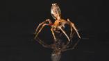 Способность передвигаться по воде помогает паукам мигрировать на внушительные расстояния