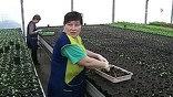 Распродали, посадили – и в лучшем случае вырастет на грядке одуванчик или еще какой сорняк.