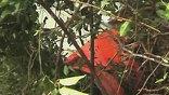 Найден бортовой самописец разбившегося в Мангалоре Boeing-737