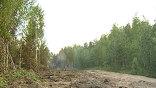 Пожарные дежурят около леса сутками, чтобы не пустить огонь к постройкам