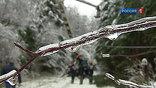И если бы не ледяной дождь с последующим за ним массовым отключением электричества, вряд ли бы вспомнили, что просеки в Подмосковье заужены порой в несколько раз. А ведь это одно из основных правил, чтобы деревья от ЛЭП были на безопасном расстоянии.