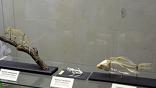 При желании, можно было ходить по всему музею, а не только к динозаврам