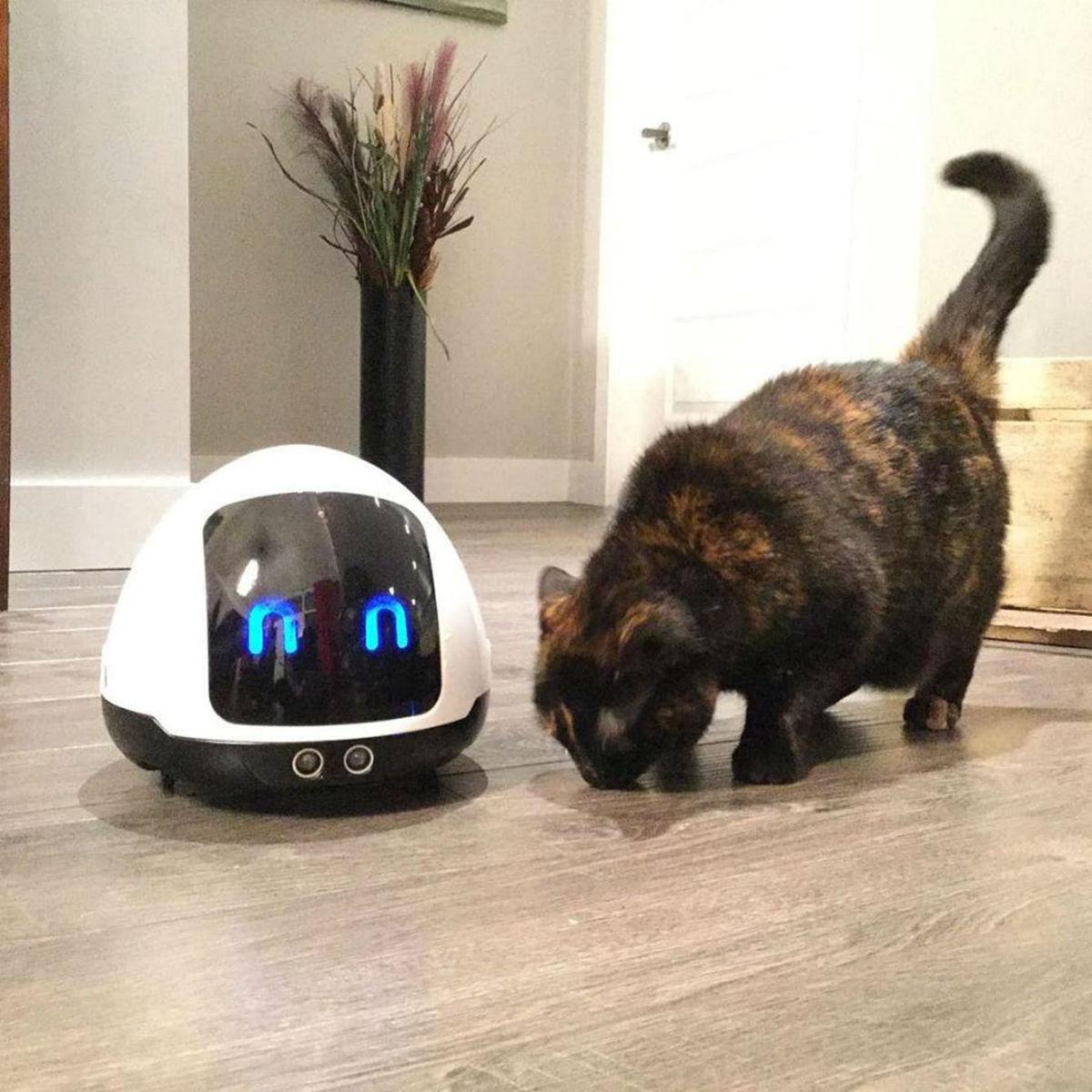 Создан робот Mia, который недаст питомцу тосковать вотсутствие хозяев