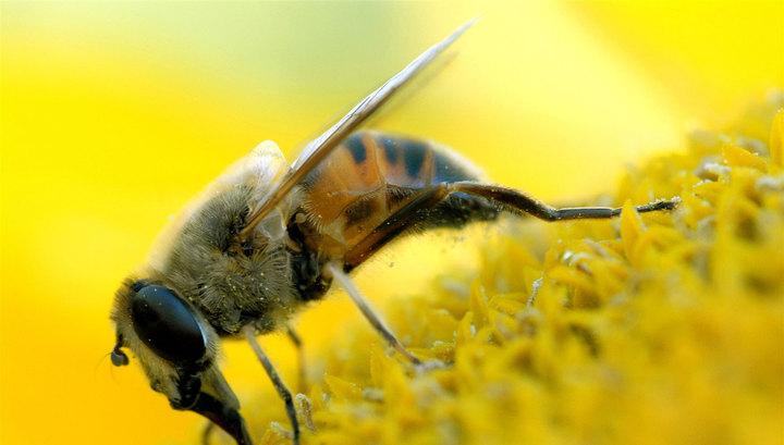 Застрявший на вершине вулкана американец выжил, питаясь пчелами