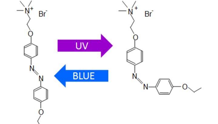 Схема изомеризации азоТАБа. Каждый из вариантов молекулы делает своё дело.