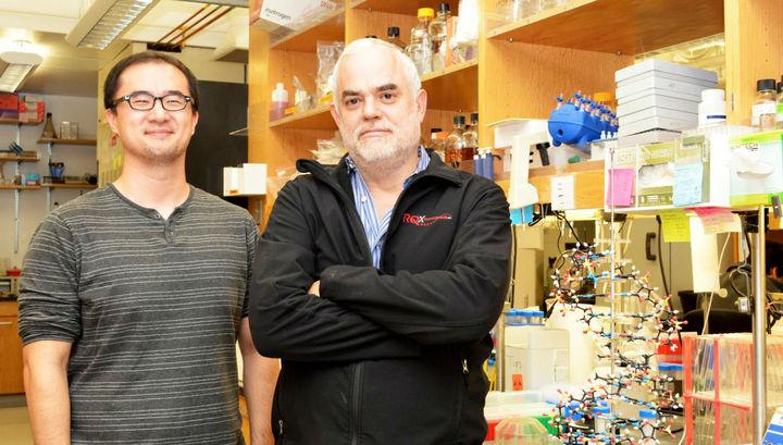 Новая форма жизни: разработаны первые вистории полусинтетические организмы