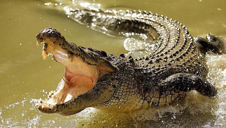 В Араратской области Армении будут разводить крокодилов на ферме с пунктами питания