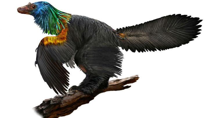 """Радуга с хохолком: небольшой оперённый динозавр удивил палеонтологов красочностью """"наряда"""""""
