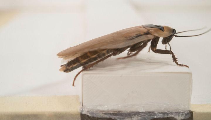 Тараканы учат роботов бегать по пересечённой местности
