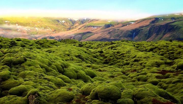 """Древние растения """"захватили"""" сушу почти на сто миллионов лет раньше, чем считалось"""