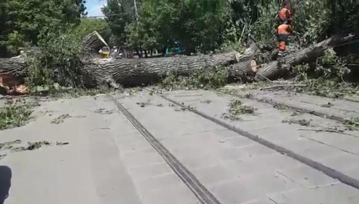 Женщина пострадала от падения деревьев в Москве