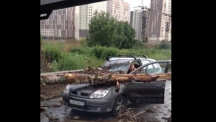 Ураган повалил дерево на машины, ехавшие по шоссе в Люберцах