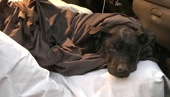 В США пес спас семью от пожара, разбудив хозяев среди ночи