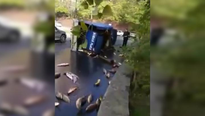 """""""Вот это я приехал на рыбалку!"""": в Ростове перевернулся грузовик с живыми карпами"""