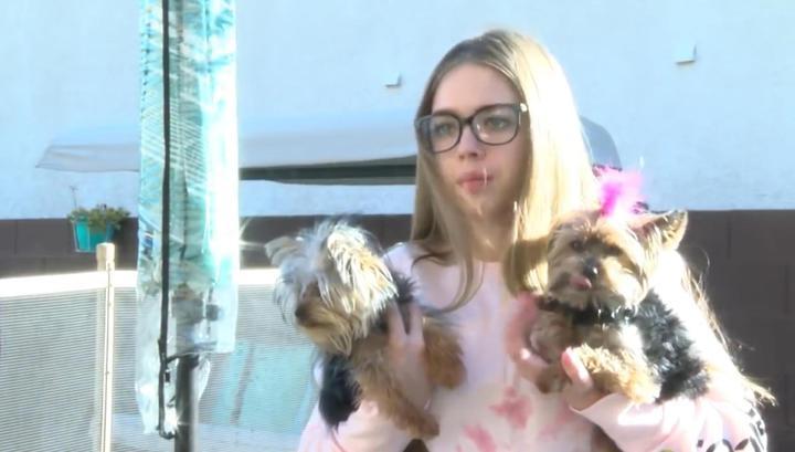 Юная американка с помощью подушки отбила у ястреба своего щенка