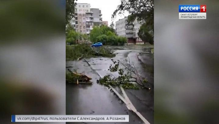 Жители Ленобласти расчищают дороги и огороды после урагана