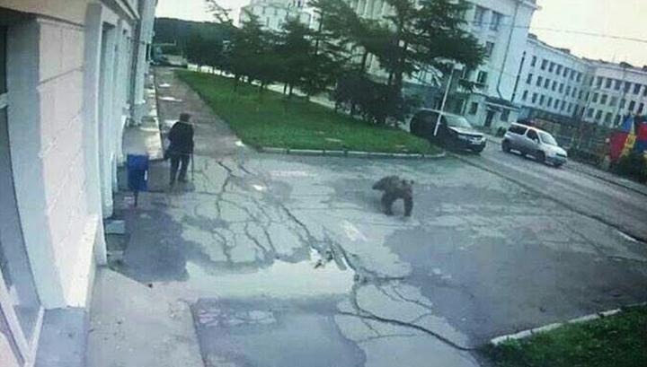 Удирающий от полицейских медведь в Магадане попал на видео photo
