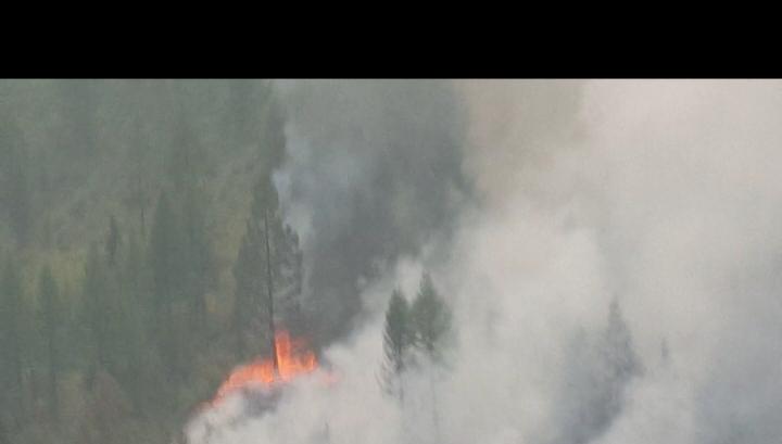 Генпрокуратура РФ взялась за коррупцию в лесной отрасли после летних пожаров