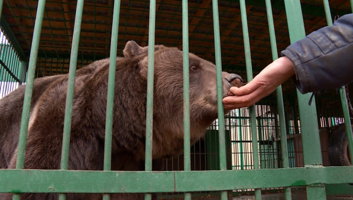 Аномально теплая погода мешает медведям в зоопарке заснуть