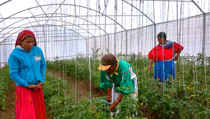 ФАО: мировые цены на продовольствие растут